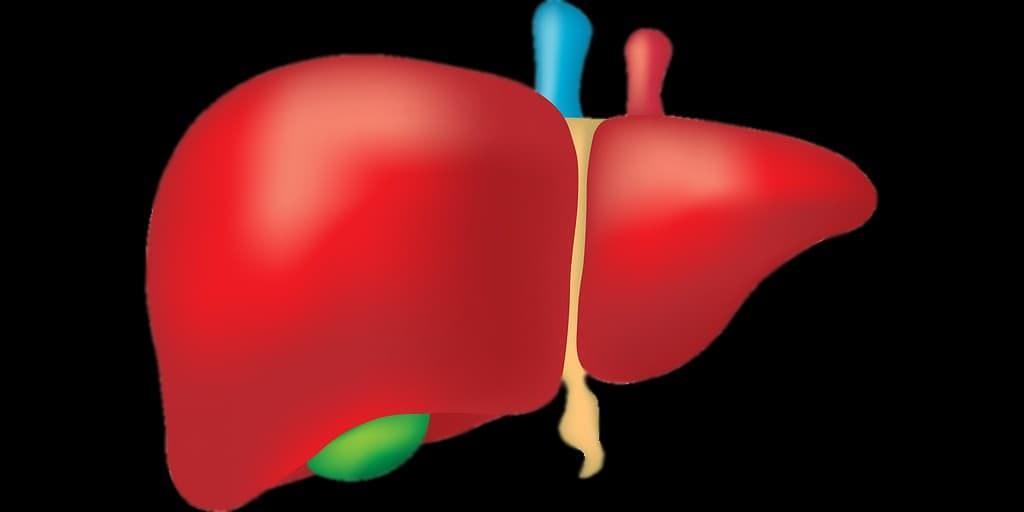 foie-médicament-contre-le-diabète