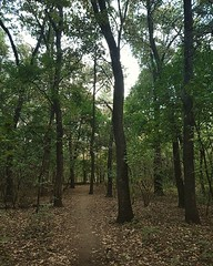 It happened again, around the second third of my morning jog, when I felt a sudden surge of euphoria. I became aware of how beautiful this forest is, how lucky I am that I can come here, and grateful for my body to keep pushing. Those couple minutes were