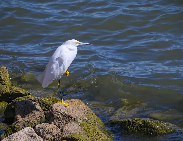 Egret Strikes A Pose