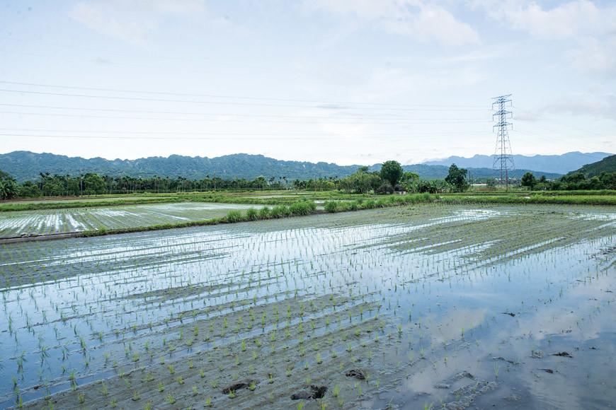 豐耕有機農場的作物在依山傍水的環境生長,獲得應有的生長週期。