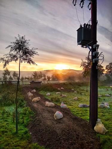 motorola snapseed g6 silsden steeton aire valley airedale misty morning scenery mist landscape sunrise sheep