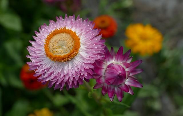 Mummy's flowers