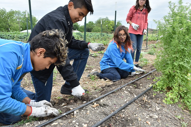 Students at IDEA Monterrey Park planting herbs