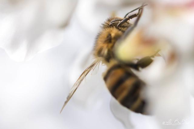 Douceur du miel et des yeux....! - Sweetness of honey and eyes ....!