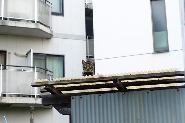 Today's Cat@2019-10-03