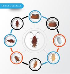 Kakerlakk