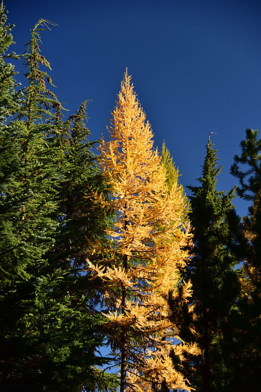 Fall Larch Hike in the Badger Creek Wilderness