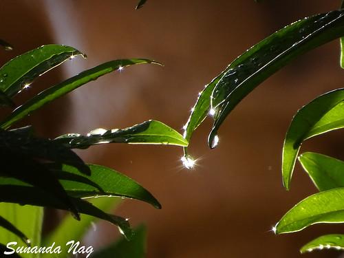 Monsoon Vibe