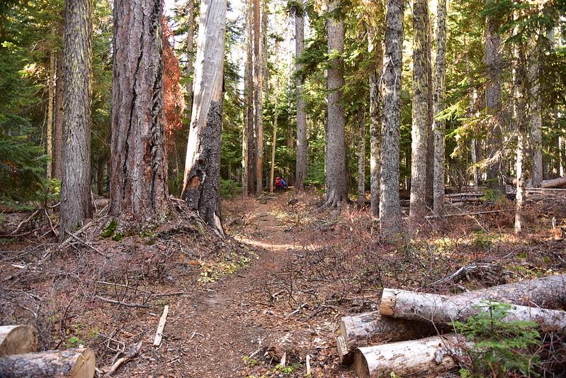 Fret Creek Trail