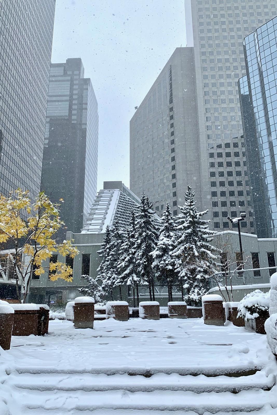 Shades of winter, Calgary, Alberta, Canada