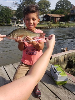 Photo of boy holding a 13.25-inch white perch