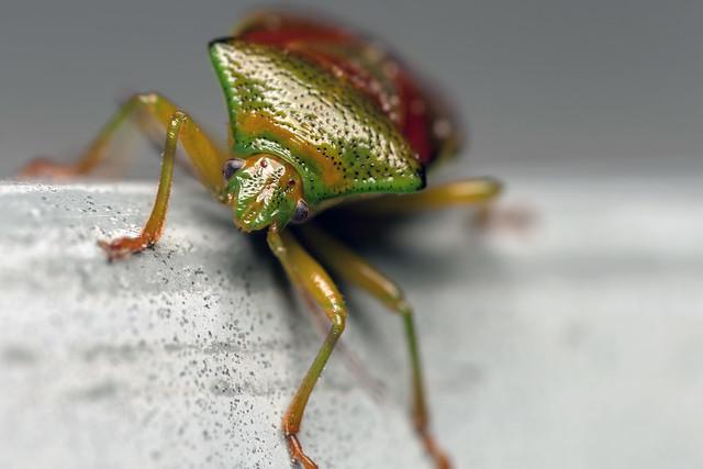 Candy Bug - _TNY_7269