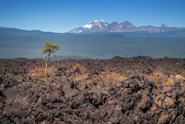 Lone Tree in the Lava Bed