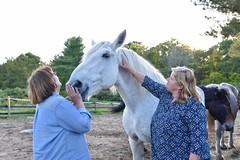 Rep. Haines toured Connecticut Draft Horse Rescue in East Hampton