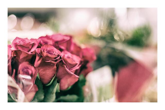 3/31: A bokeh of roses