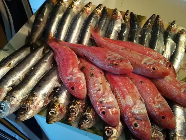 sardines et rougets