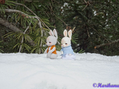 Les dolls de Harikanu : Fairyland, Cocoriang, etc. 48838709582_a896df9394_w