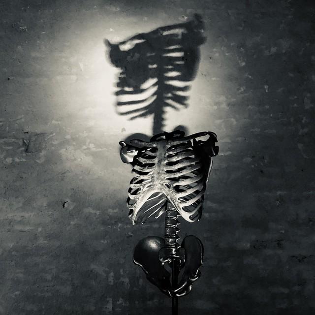 Luce-ossa