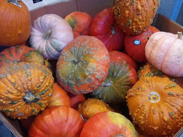 Select pumpkins #toronto #carltonstreet #pumpkin #orange #loblaws #loblaws60carlton #fall #autumn