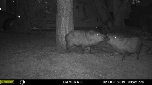 javelina_fight_club-20191002-150