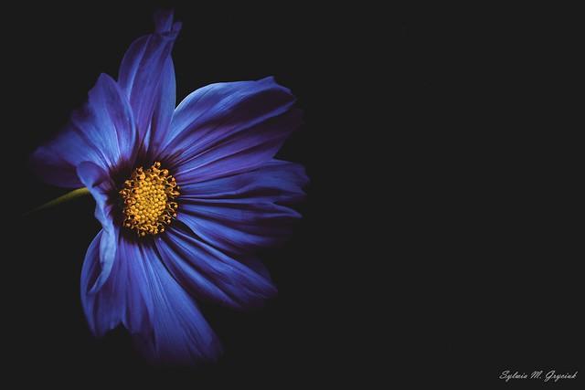 Melancholic Blue