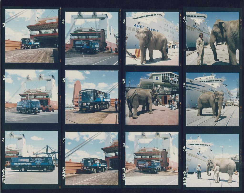 Animals and birds: showgrounds, circus, sanctuary, beach