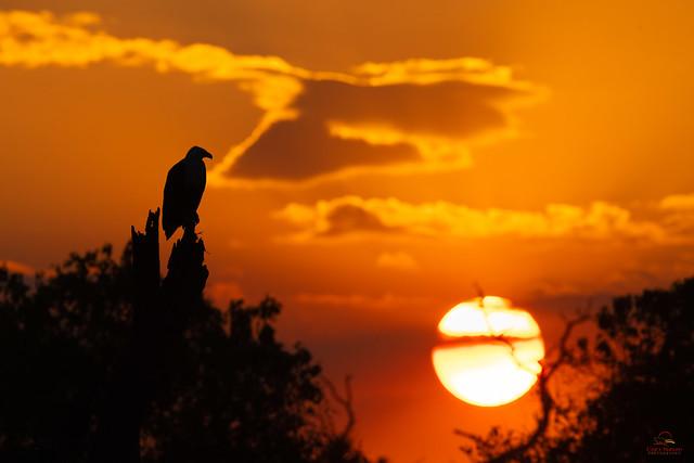 Admiring the Chobe Sunset