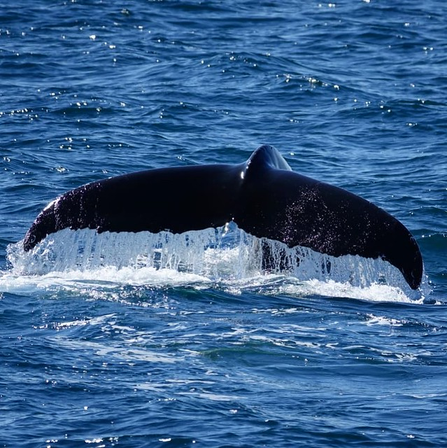Find The Best places to see Whale Watching Tour in Iceland