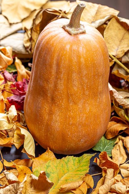 Orange pumpkin on dry autumn leaves