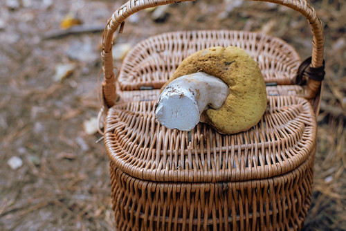 Последний белый гриб сезона-2019 Автор: Вячеслав Степанов