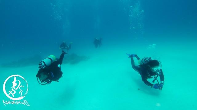 砂地の上をのんびり泳いでみたり♪