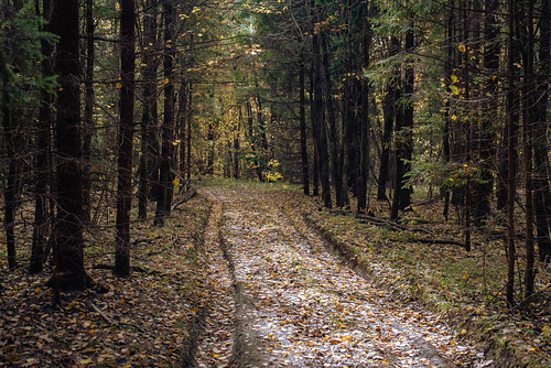 Осенний лес Автор: Вячеслав Степанов
