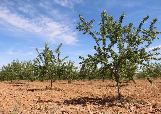 Árboles replantados