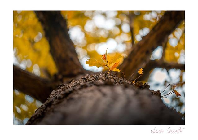 Les couleurs de l'automne - The Autumn colors