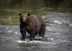 Another Big Bear