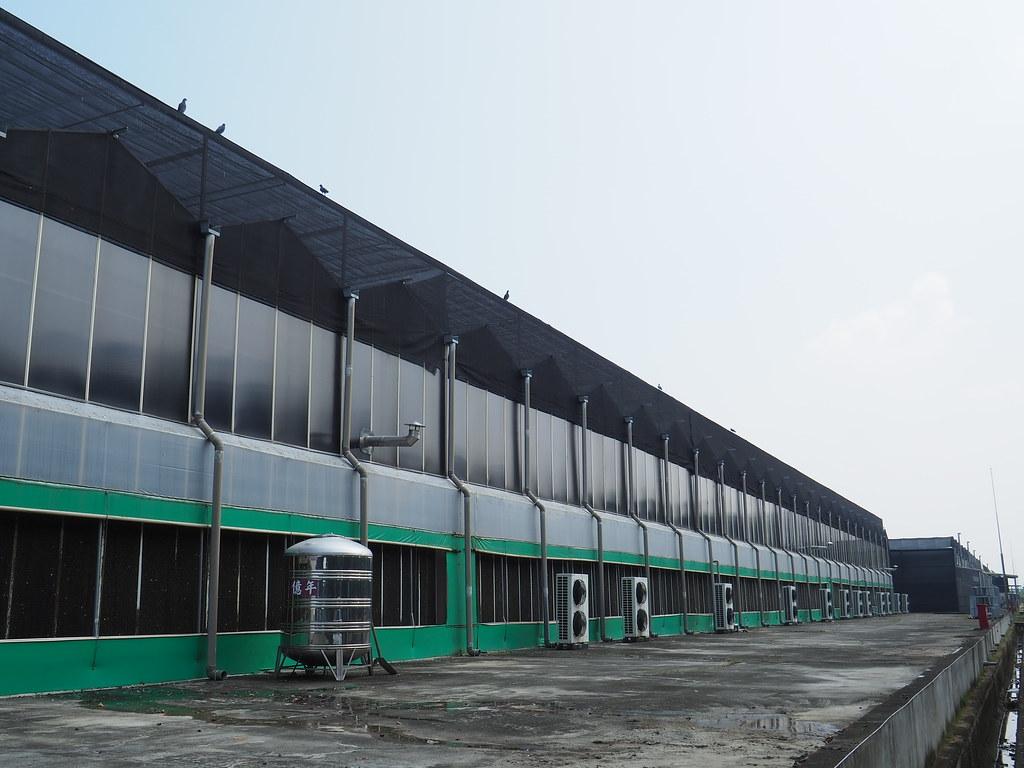 台南後壁製蝶所 (15)
