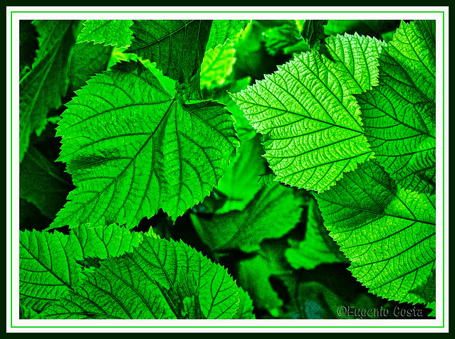 il verde della foglia - the green of the leaf