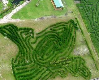 """The """"Corn Maze Adventure"""" at Scott Farms in Mount Dora"""