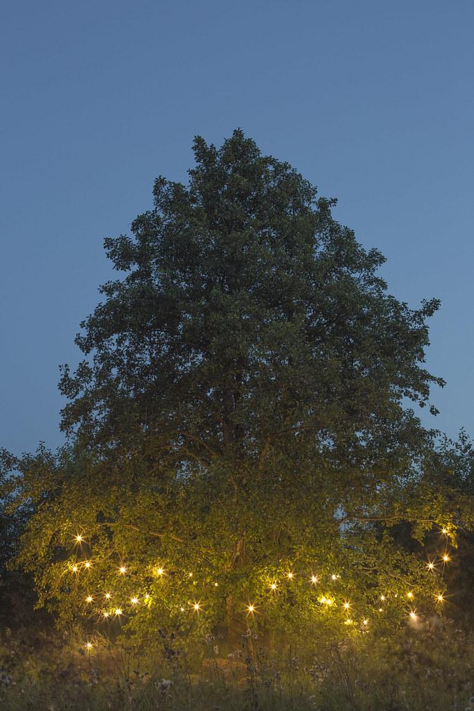 Волшебство вечера_Чудо-дерево