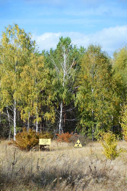 Forest with high radioactivity near Pripyat, Ukraine
