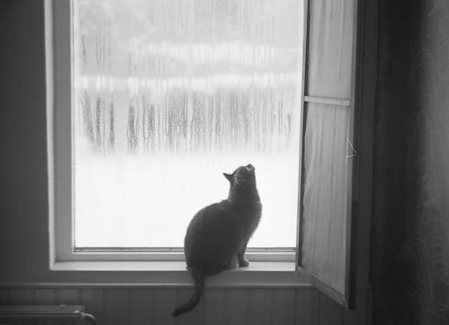 It was a cold snowing day...