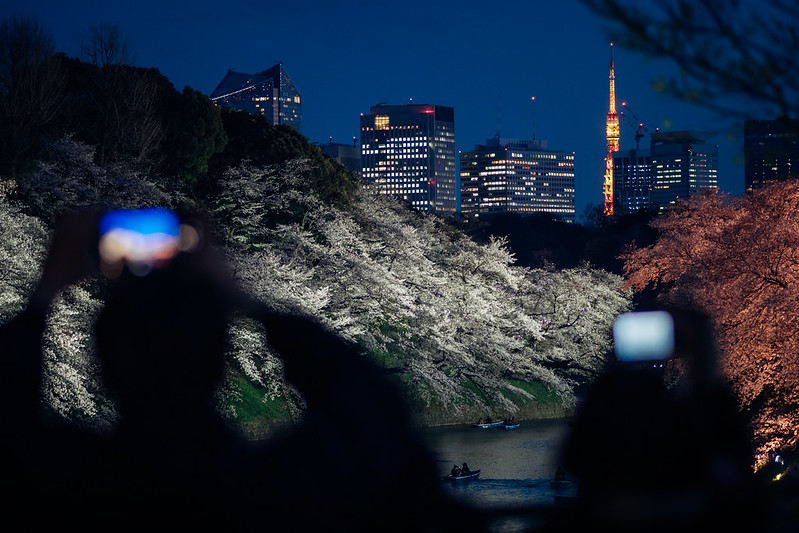 千鳥之淵|櫻花季