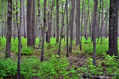 Take More Than a Moment to Explore the World Around You (Congaree National Park)