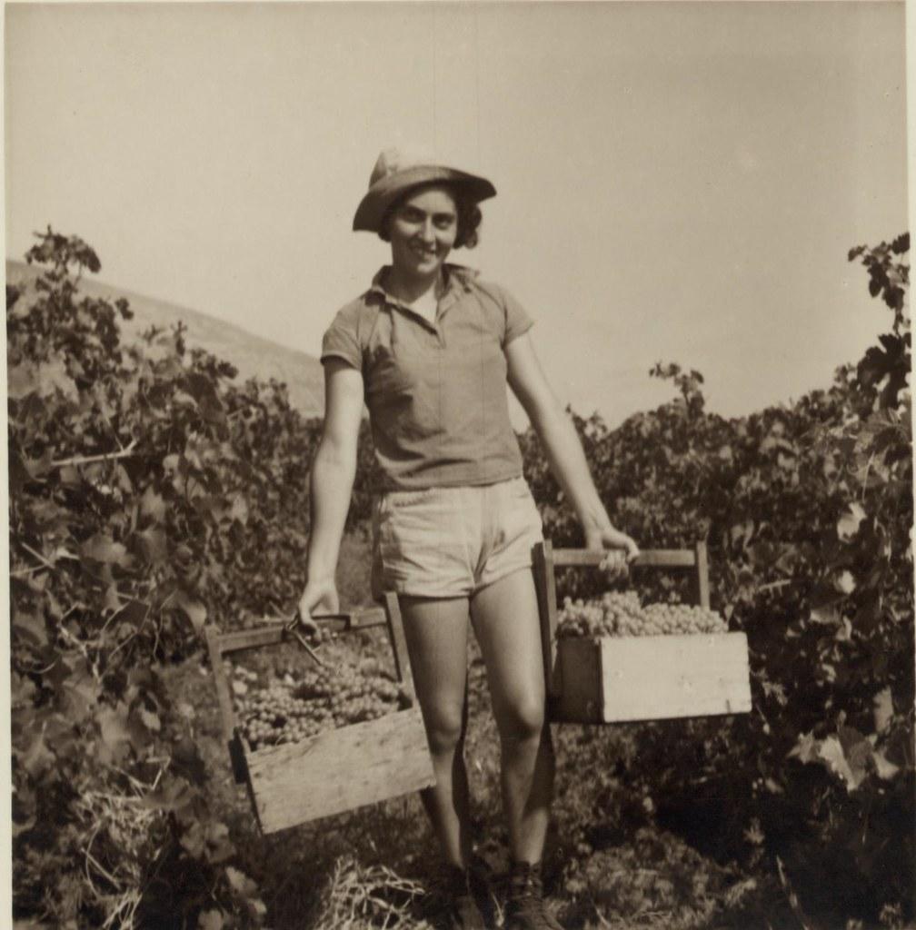 23. 6 июля. Подножие горы Кармель. Девушки-кибуцницы собирают ранний столовый виноград для рынка Хайфы3