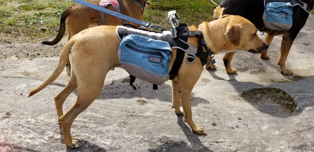 Outward Hound dog backpack GoPro