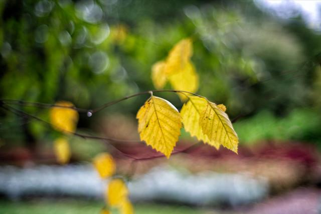 _DSC7613 Fall Color