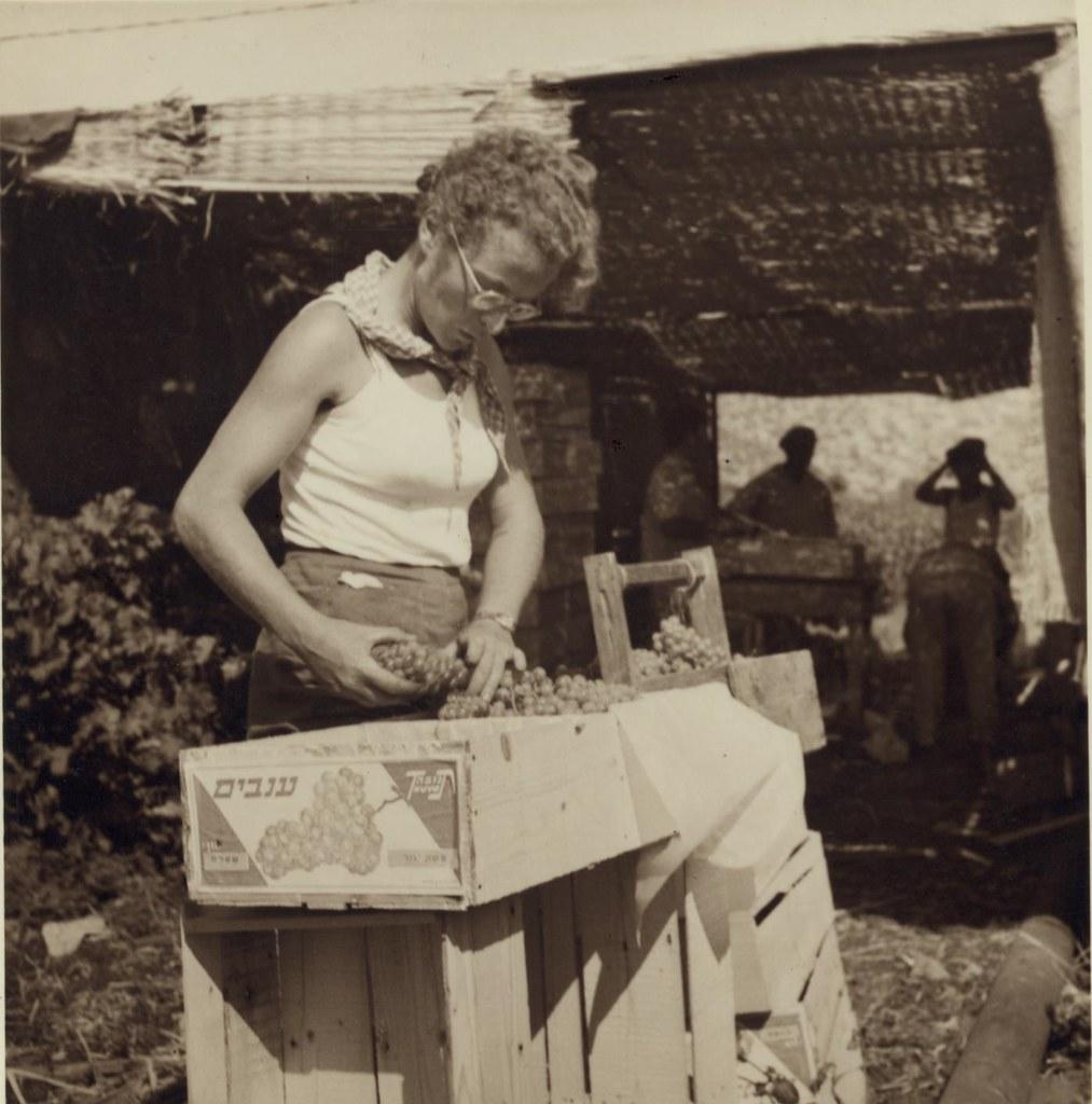24. 6 июля. Подножие горы Кармель. Девушки-кибуцницы собирают ранний столовый виноград для рынка Хайфы2