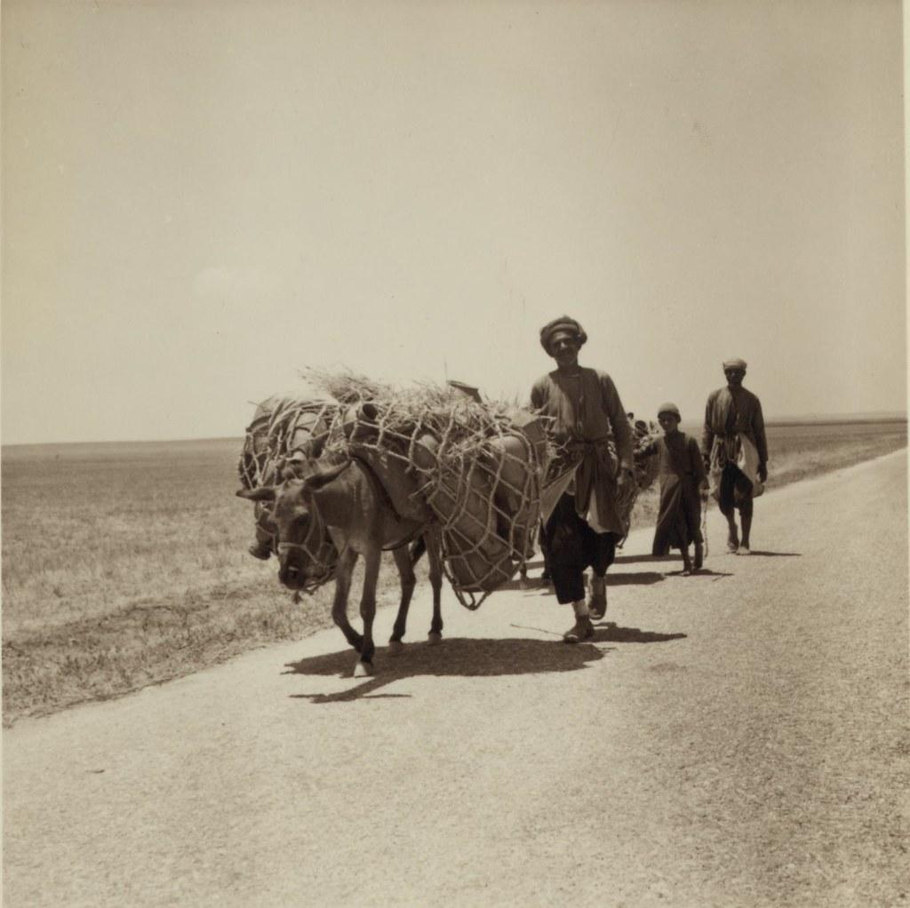 15. 3 июля. Торговцы гончарными изделиями из Газы везут товары на рынок