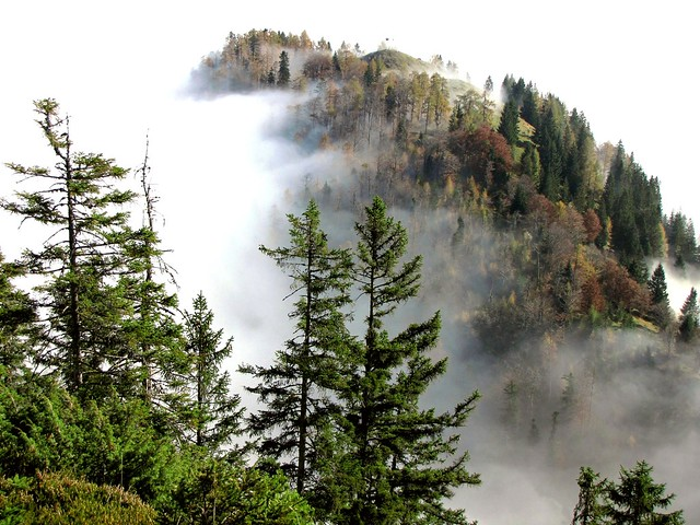 Herbst im Bergwald - Autumn in the mountain forests