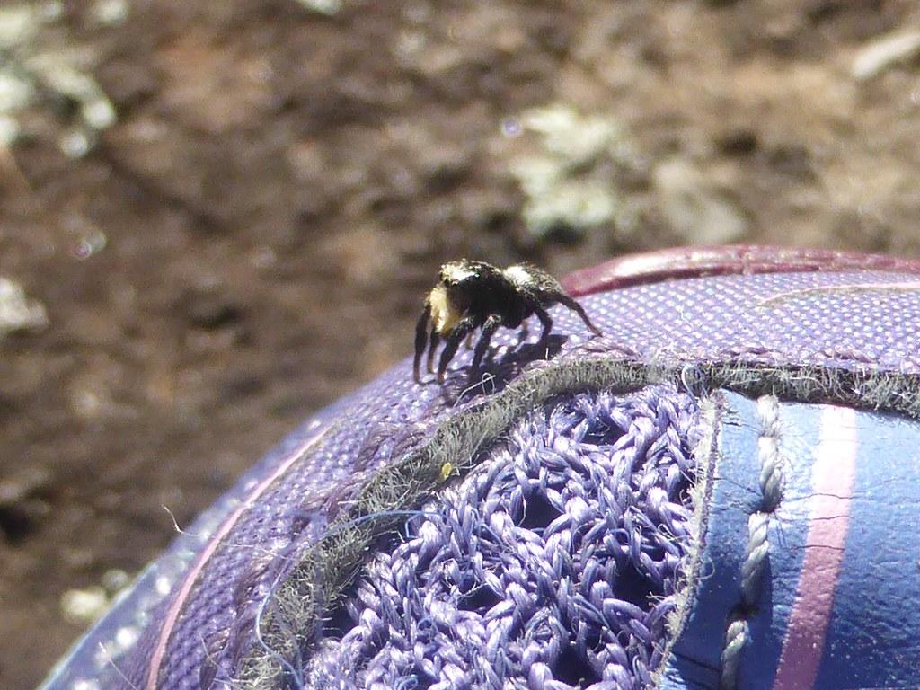 Spider Shoe